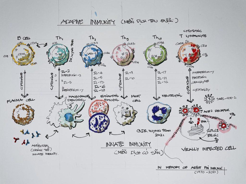 Cytokine là gì?